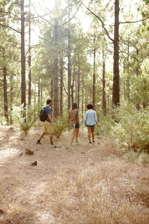 pine three: Three friends strolling in a pine tree forest in the late afternoon sunshine, looking ahead while wearing casual clothing