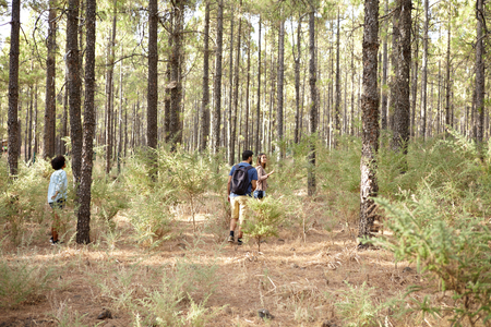 interested: Friends exploring a pine tree plantation in the late afternoon shadows while wearing casual clothing looking interested