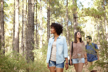 pine three: Three friends looking for something in a pine tree forest in the late afternoon sunshine while wearing casual clothing