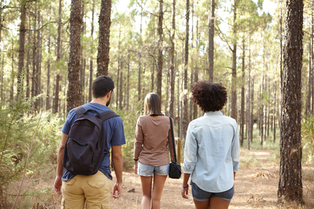 dappled: Three friends walking in the dappled afternoon sunshine surrounded by pine trees while wearing casual clothing Stock Photo