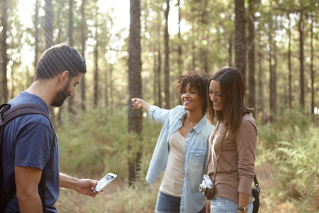 pine three: Three friends chatting in a pine tree plantation in the late afternoon sunshine while looking at the cell phone
