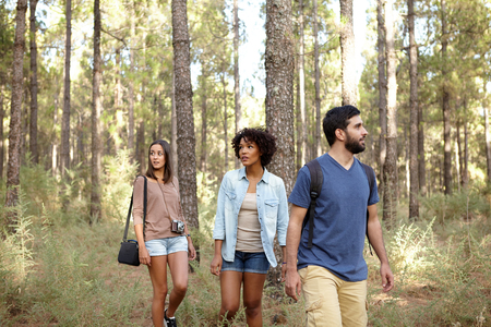 leisurely: Three friends strolling leisurely through a pine tree forest in the late afternoon sunshine while wearing casual clothing Stock Photo
