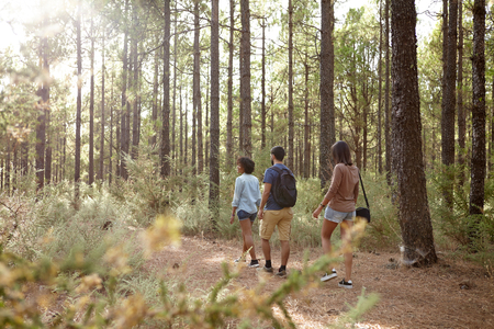 looking ahead: Three friends strolling in a pine tree plantation in the late afternoon sunshine, looking ahead while wearing casual clothing