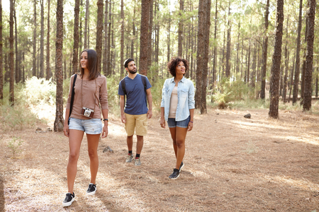 pine three: Three friends exploring a pine tree plantation in the afternoon sunshine, looking up while wearing casual clothing