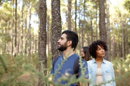 pine three: Three friends looking thoughtfully up into the pine tree forest in the late afternoon sunshine while wearing casual clothing
