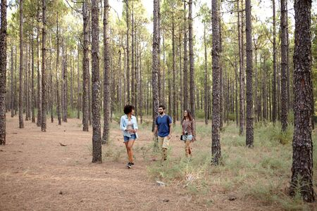pine three: Three friends walking in the pine tree forest in the late afternoon sunshine while wearing casual clothing