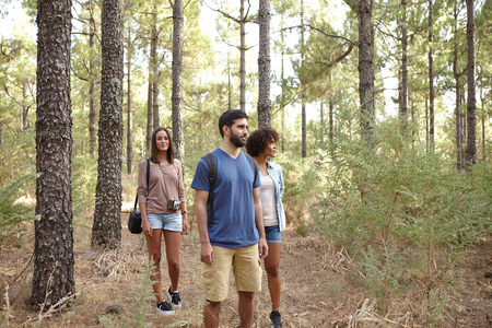 pine three: Three friends happily strolling through a pine tree plantation in the late afternoon sun while wearing casual clothing