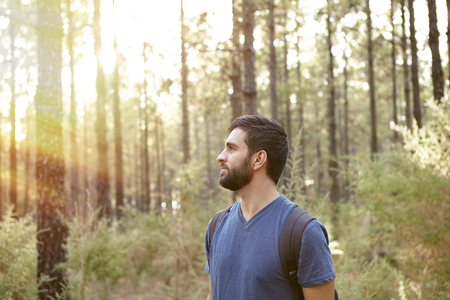 looking around: Young man looking around and listening in the pine trees of a plantation while wearing casual clothing and a backpack