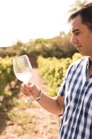 Man standing in a vineyard on a sunny day holding a glass in front of him looking at the wine in the glass