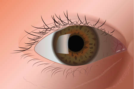 eye green: Realista ojo verde Vectores