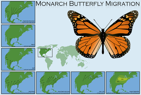 butterfly vector: Monarch Butterfly Migration