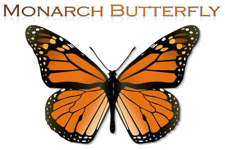 monarch butterfly: Monarch Butterfly