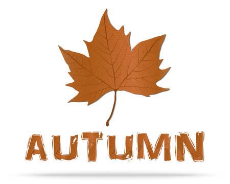 leaf: Autumn Leaf
