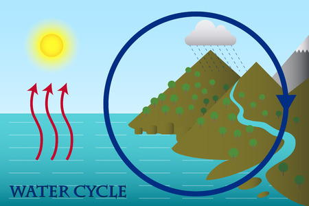 transpiration: The Water Cycle