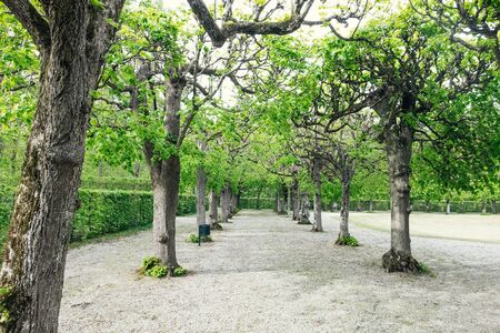 Tree-lined alley in a park