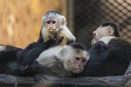 Animales salvajes de todo el mundo