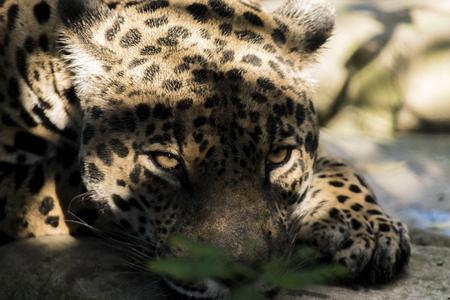 Animais selvagens de todo o mundo Foto de archivo - 80245560