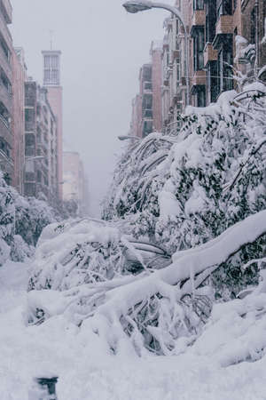 Fallen tree in Madrid with heavy snow and covered in snow due to historic snow storm Filomena with cars ander the trees. Buildings in the back. Reklamní fotografie