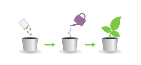 Vector illustration of the crop growing process 일러스트