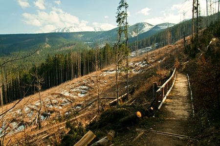 Broken tree destruction wind disaster in forest