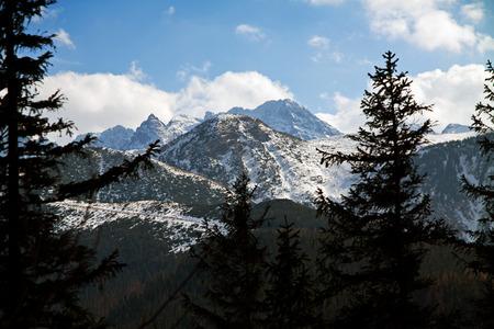 zakopane: Mountain snowy landscape with forest in Zakopane