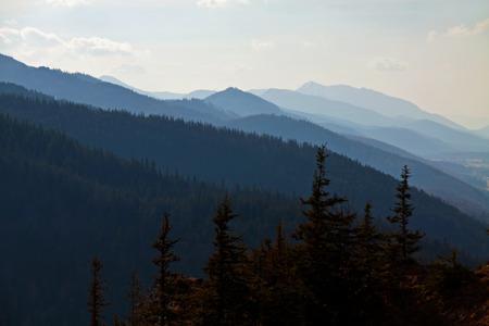 zakopane: Mountain snowy landscape with pine forest in Zakopane