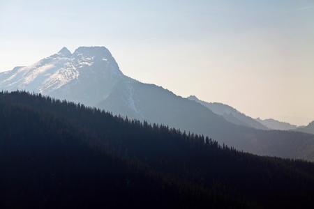 zakopane: Mountain horizon landscape with tree forest in Zakopane