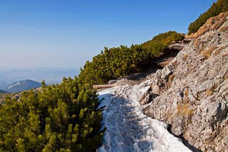 zakopane: Mountain landscape with rock path and trees in Zakopane