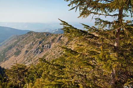 zakopane: Mountain landscape with rocks and trees in Zakopane