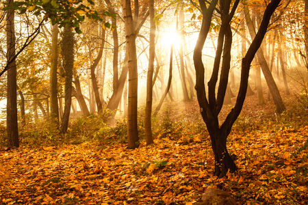 Mystical sun rays between trees in autumn forest Standard-Bild
