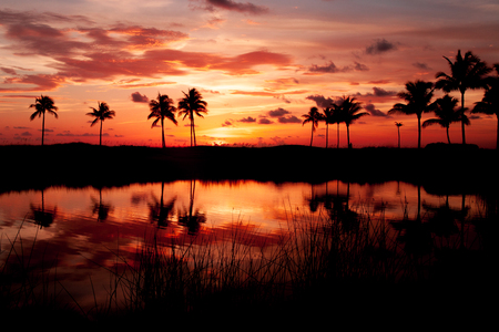 naranja arbol: Silueta Tropical Sunset Foto de archivo