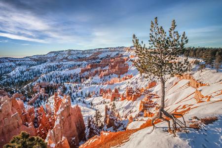 브라이스 캐년, 유타의 테두리에 외로운 소나무 일출 동안. 스톡 콘텐츠