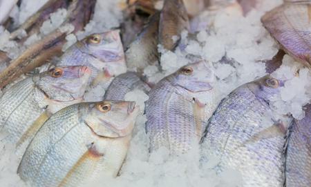 fish vendor: Fresh caught whole fish at fish market