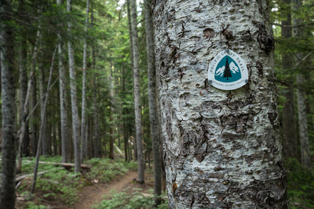 Pacific Crest Trail marker in the forest of Oregon