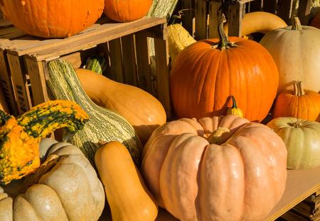 pumpkins gourds: Arrangement Pumpkins, gourds and squash. Stock Photo