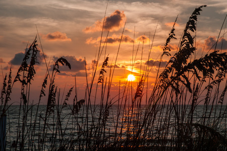 Sea grass on the sand dunes at sunset along the beach of Captiva Island, Florida