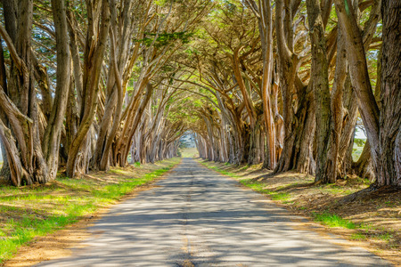 """The Monterey cypress """"tree tunnel"""" at the Point Reyes station is a signature landscape feature of the Point Reyes National Seashore in California 스톡 콘텐츠"""