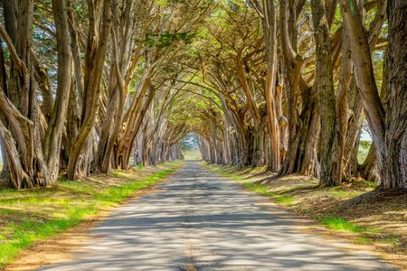 """포인트 레이즈 (Point Reyes) 역의 몬터레이 노송 나무 """"나무 터널""""은 캘리포니아의 포인트 레이즈 국립 해안 (Point Reyes National Seashore)"""