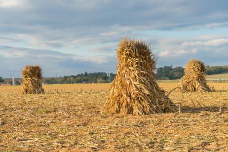 펜실베니아 주 랭커스터 카운티에서 수확하는 동안 옥수수가 충격을 받거나 농장 필드에 쌓입니다.