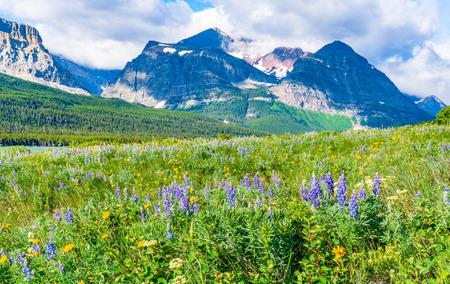 Wildflower Meadow near Many Glacier in Glacier National Park, Montana