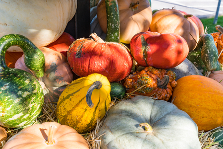 Autumn arrangement of colorful gourds and pumpkins Stock Photo