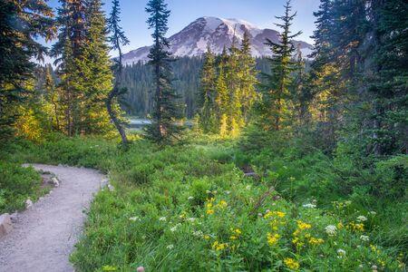 Trail through a wildflower meadow near Mount Rainier, Washington