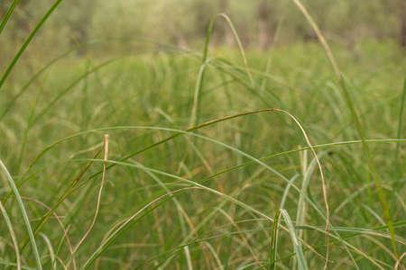 Green grass summer background. Selective focus