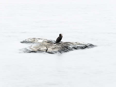14 January, 2018 - Gothenburg, Sweden. Cormorant resting on a rock. in a lake. The highlights of the water is whitened in post production. Stock Photo