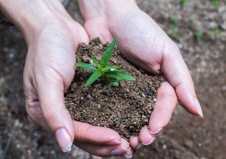 earth handful: Hands holding young plant with soil Stock Photo