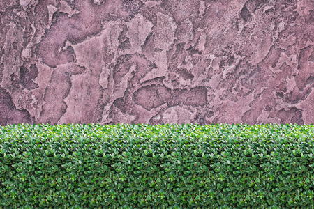 green plants: Bushes Fence and Stone Wall  Background Stock Photo