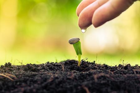Landbouwboerderij met plantzaadkweekconcept en jonge plant water geven