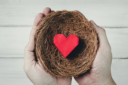 Man Hands Hold Red Paper Heart in bird nest on white wood background. Protect Love or Health Concept.
