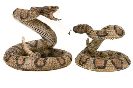 parlance: Wooden snakes isolated on a white background Stock Photo