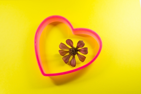 compositae: Idea picture of Compositae family flower in heart frame Stock Photo
